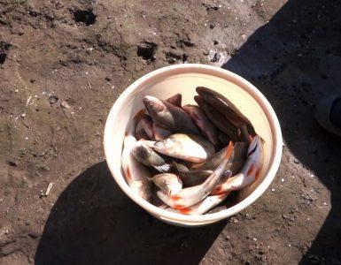 Как почистить ведро рыбы за 15 минут